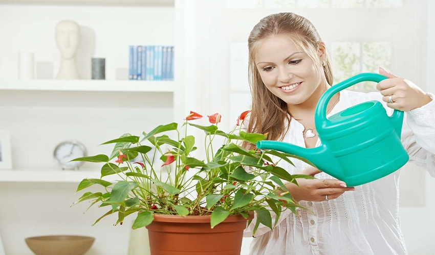 5 best indoor plants that purify the air