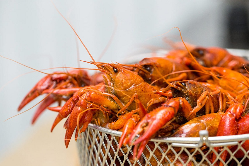 Business Idea of Growing and Selling Crayfish