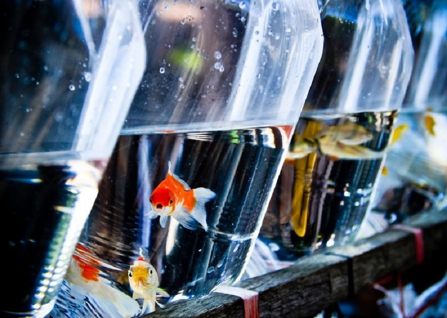 How to set up an ornamental fish store
