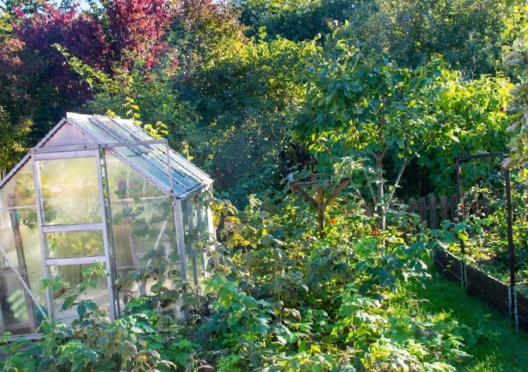 6 Ways You Can Prepare Your Garden For Winter