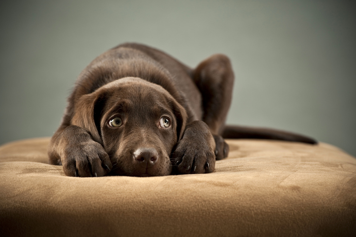 10 signs that alert your dog is depressed