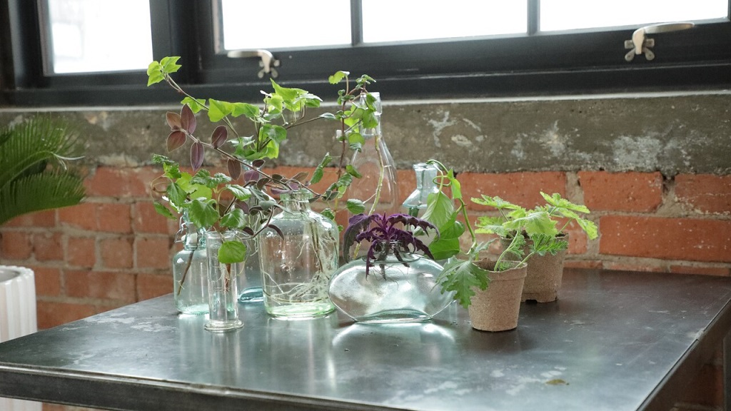 Beginners Guide to Propagating House Plants