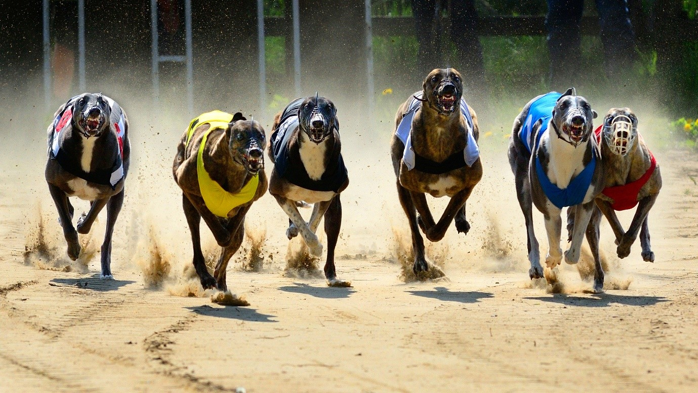 Greyhound racing: key dates for your diary