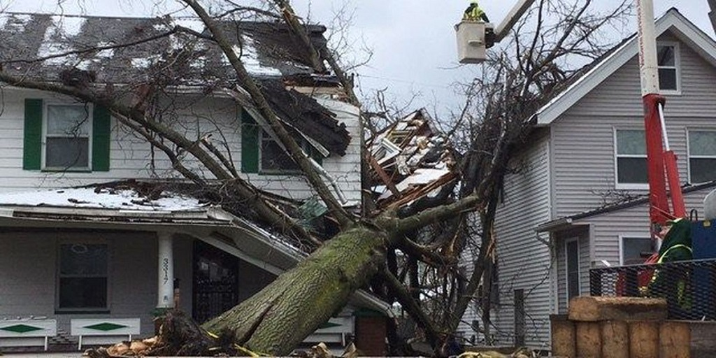 Who Is Liable If a Neighbour's Tree Falls on My House?