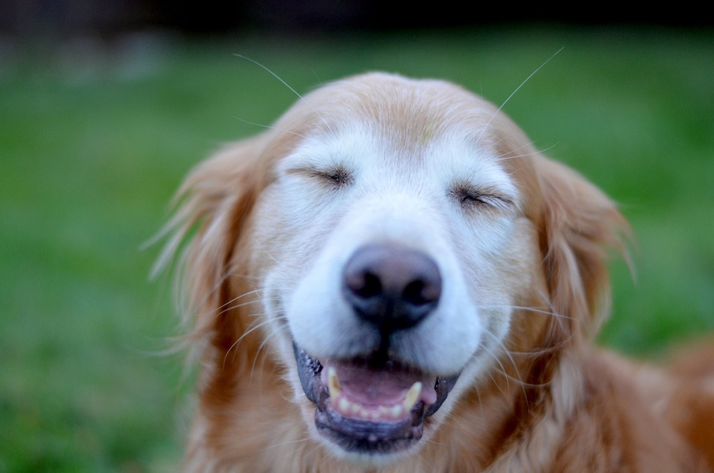 secret to happy dogs